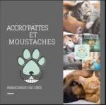 AccroPattes et Moustaches
