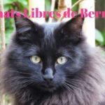 Les chats libres de Berne